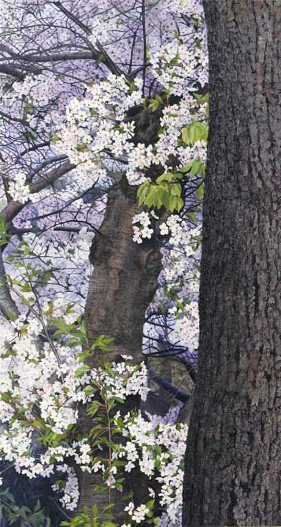 2061 Bark and Blossoms