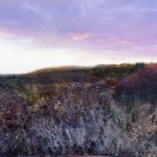 464 Autumn Thicket, Dusk.jpg
